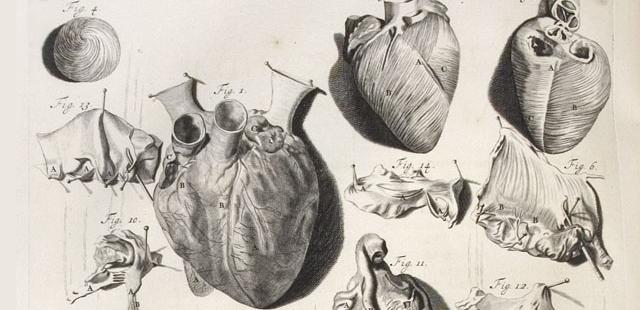 Gerard de Lairesse, Illustrazione da Anatomia humani corporis di Govert Bidloo (1685)